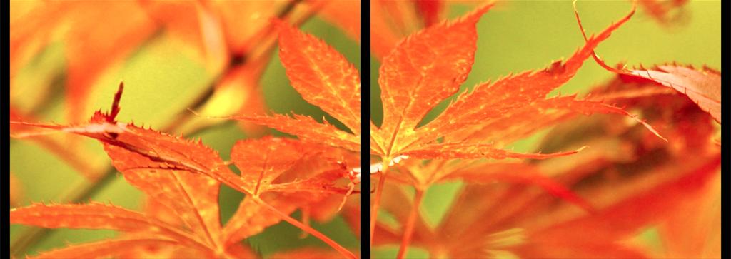 08_passages_automne