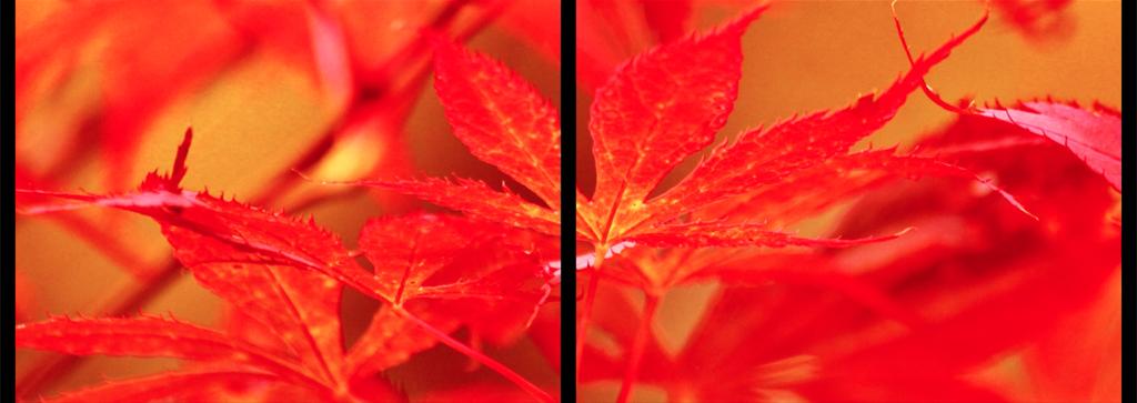 09_passages_automne